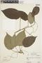 Sciadotenia paraensis (Eichler) Diels, Brazil, N. Silva 846, F