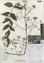 Aralia hiepiana J. Wen & Lowry, Vietnam, P. P. Lowry 4925, Isotype, F