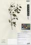 Salvia espirito-santensis Brade & Barb. Per., Brazil, A. C. Brade 18368, Isotype, F