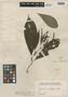 Joosia umbellifera H. Karst., COLOMBIA, G. C. W. H. Karsten s.n., Isotype, F