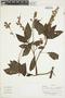 Salvia pauciserrata subsp. calocalicina (Briq.) J. R. I. Wood & Harley, Colombia, J. Cuatrecasas 27927, F