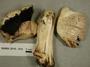 North American Mycological Association Foray 2010: specimen # NAMA 2010-012