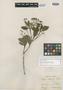 Myrcia coelosepala Kiaersk., BRAZIL, A. F. M. Glaziou 13893, Isotype, F