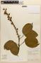 Amphilophium mansoanum (DC.) L. G. Lohmann, BOLIVIA, L. Besse 1794, F