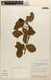 Amphilophium mansoanum (DC.) L. G. Lohmann, BRAZIL, M. G. da Silva 4452, F