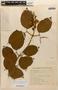 Amphilophium mansoanum (DC.) L. G. Lohmann, BRAZIL, M. Barreto 1878, F