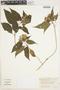 Aphelandra pulcherrima (Jacq.) Kunth, Costa Rica, J. Cuatrecasas 26517, F