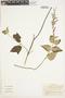 Salvia sphacelioides subsp. sphacelioides Benth., Colombia, J. Cuatrecasas 24411, F
