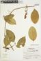 Anemopaegma chrysanthum Dugand, PERU, S. Leiva G. 1590, F