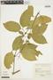 Anemopaegma chrysanthum Dugand, COLOMBIA, 1551, F
