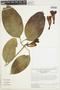 Anemopaegma chrysanthum Dugand, COLOMBIA, H. P. Fuchs 7583, F