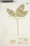 Anemopaegma chrysanthum Dugand, COLOMBIA, J. Cuatrecasas 15904, F