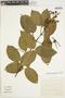 Amphilophium mansoanum (DC.) L. G. Lohmann, Brazil, M. M. Arbo 4878, F