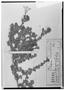 Field Museum photo negatives collection; Wien specimen of Alona deserticola Phil., CHILE, R. A. Philippi, Type [status unknown], W