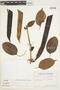 Dolichandra uncata (Andrews) L. G. Lohmann, Ecuador, G. W. Harling 7390, F