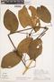 Bignonia hyacinthina (Standl.) L. G. Lohmann, PERU, A. H. Gentry 25648, F
