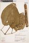 Bignonia hyacinthina (Standl.) L. G. Lohmann, PERU, E. Wade Davis 2000, F