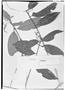 Field Museum photo negatives collection; Genève specimen of Chiococca nitida Benth., BRITISH GUIANA [Guyana], R. H. Schomburgk 1055, Holotype, G