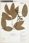Tetragastris panamensis (Engl.) Kuntze, COLOMBIA, F