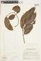 Tetragastris panamensis (Engl.) Kuntze, GUYANA, F