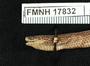 FMNH 17832