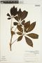 Godmania aesculifolia (Kunth) Standl., VENEZUELA, C. E. Benítez de Rojas 2815, F