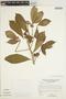 Godmania aesculifolia (Kunth) Standl., VENEZUELA, J. A. Steyermark 110037, F