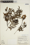 Jacaranda obtusifolia subsp. rhombifolia (G. Mey.) A. H. Gentry, BRAZIL, N. T. da Silva 4890, F