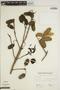 Jacaranda obtusifolia Bonpl. subsp. obtusifolia, VENEZUELA, L. Aristeguieta 4506, F