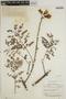 Jacaranda obtusifolia subsp. rhombifolia (G. Mey.) A. H. Gentry, BRITISH GUIANA [Guyana], A. C. Smith 2119, F