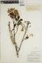 Jacaranda obtusifolia subsp. rhombifolia (G. Mey.) A. H. Gentry, BRITISH GUIANA [Guyana], A. C. Smith 3125, F