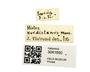 3041690_Margarinotus_kurdistanus_Label_IN