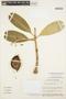 Aspidosperma nobile Müll. Arg., BRAZIL, C. A. Cid Ferreira 6397, F