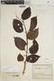 Lundia puberula Pittier, COLOMBIA, J. Cuatrecasas 13148, F