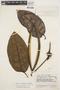 Macropharynx spectabilis (Stadelm.) Woodson, VENEZUELA, J. A. Steyermark 60771, F
