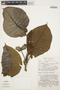 Macropharynx spectabilis (Stadelm.) Woodson, PERU, J. Schunke Vigo 6785, F