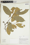 Herbarium Sheet V0414914F