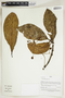 Herbarium Sheet V0414926F