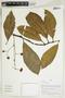 Herbarium Sheet V0414927F