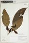 Herbarium Sheet V0414958F
