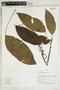 Herbarium Sheet V0414959F