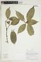 Herbarium Sheet V0415052F