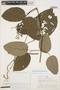 Tynanthus panurensis (Bureau) Sandwith, PERU, A. H. Gentry 21066, F