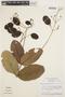 Jacaranda simplicifolia K. Schum., Brazil, H. S. Irwin 14597, F