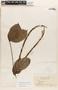 Mandevilla symphytocarpa (G. Mey.) Woodson, GUYANA, J. S. de la Cruz 1474, F