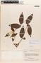 Mandevilla symphytocarpa (G. Mey.) Woodson, VENEZUELA, J. A. Steyermark 75338, F