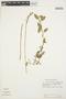 Kreodanthus crispifolius Garay, ECUADOR, M. T. Madison 6898, F