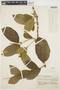 Prestonia solanifolia (Müll. Arg.) Woodson, Brazil, Y. Mexía 5537, F