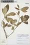 Rauvolfia atlantica Emygdio, BRASIL, Cardoso,D. 2505, F