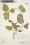 Prestonia mollis Kunth, PERU, T. C. Plowman 14234, F